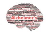 Alzheimers in the Brain