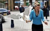 birds stealing food