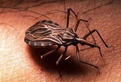 Is Chagas still an active disease today?
