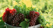 הענבים- הבסיס ליין