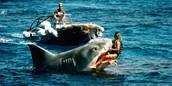 First shark attack