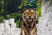 Tiger & Toilet Paper