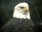 Pointy Beak