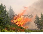 Some Areas Of The Forest Catch Fire. Likee.