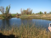 Waterfowl pond at the LHS farm