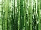 S - Bamboo