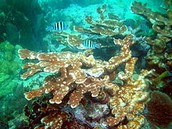 Come visit the Florida Reef!
