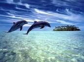 delfín (delphinidae)