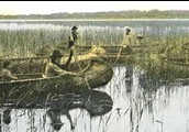 A painting of Ojidwe people collecting Wild Rice