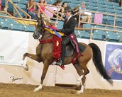 Me on Carry On LOA 2014 National Champion