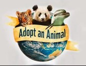 Adopt an Animals