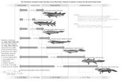 geological time scale of transforming organism's