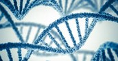 Genetics and Bipolar Disorder