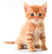 Future Pets: