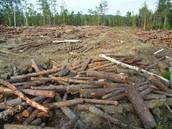 Killing of Habitats