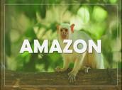 Come to Amazon