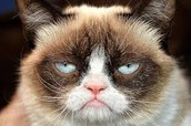 Grumpy Cat in Paris
