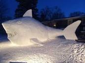 כריש שלג