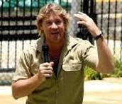 A stingray did kill Steve Irwin though...