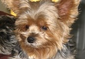 Overnight & Check-In Pet Sitting Services