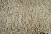 History of wool
