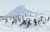 Blizzard has struck Antarctica