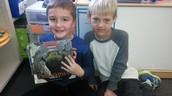 Comparing crocs and alligators...