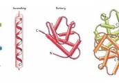 Protein (Polymer)