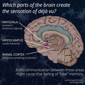 What is Going on in the Brain?