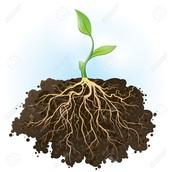 Plans on soil