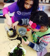 Adding rocks, sand, soil, moss, and plants!