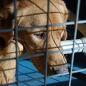 Treats & Toys for Shelter Animals
