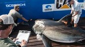 Where was the first shark tagged?