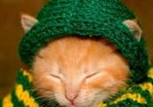 Dit is een kat met een dikke trui aan