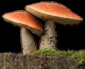 What Are fungi?