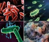 Reino Monera:¿Organismos unicelulares o pluricelulares?