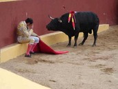 Álvero Múnera, accomplisehd torero, has become Bullfight opponent
