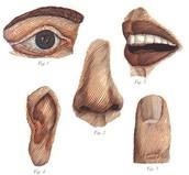 Sensory Language