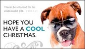 cool christmas dog