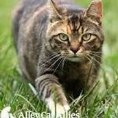 Contact Alley Cat Allies