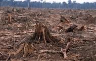 Deforestation in East Africa