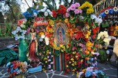 Celebrating the Virgen of Guadalupe