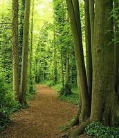 Thetford Forest!