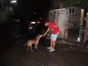 giving food to animals