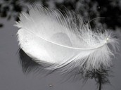 Feathers From A Thousand Li Away