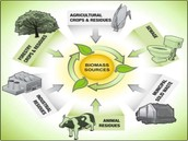 Sources for biomass