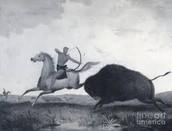 Hunting Bison