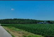 Southern Farmland
