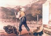Brutality of Slave Life in Brazil