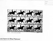 Un caballo moviéndose.